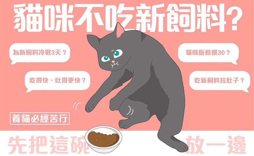 【貓侍小知識】如何幫貓咪換飼料?