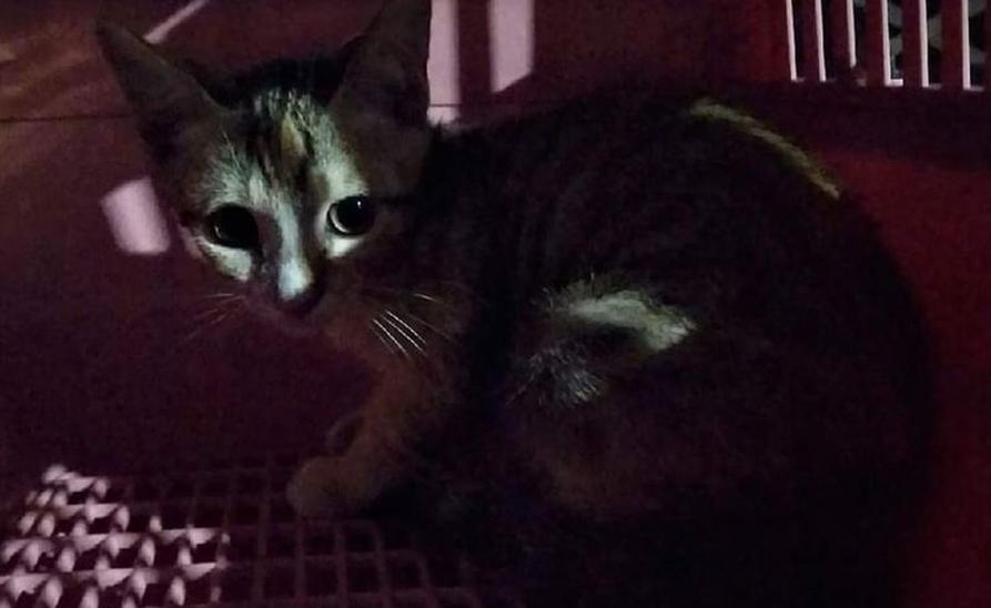 【社團法人台灣流浪貓關懷協會】「結紮」真的很重要