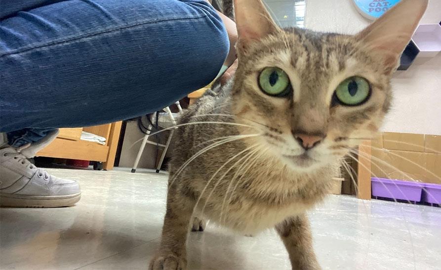 【社團法人台灣流浪貓關懷協會】母帶子一起被領養的幸福