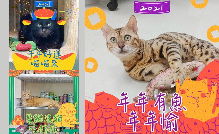 【貓侍特效框】新年一起玩特效