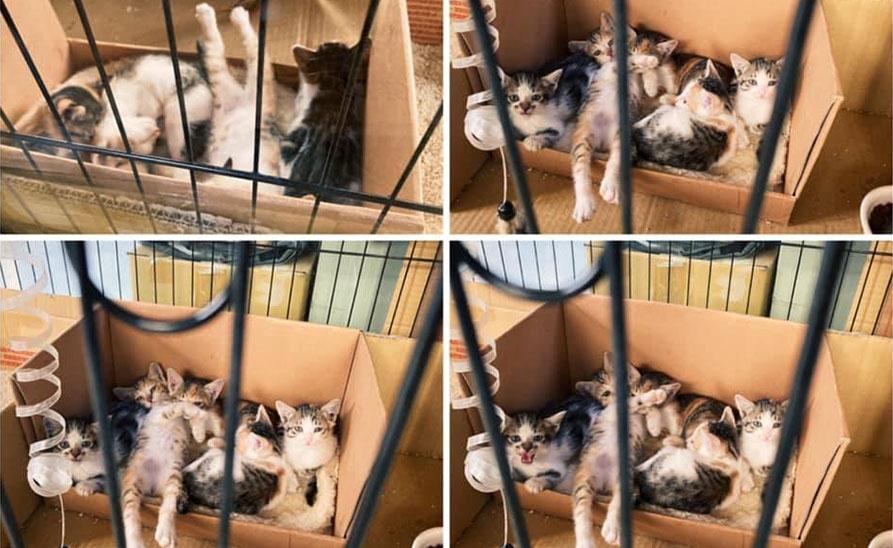 【貓侍知識文】遇見小貓怎麼辦?