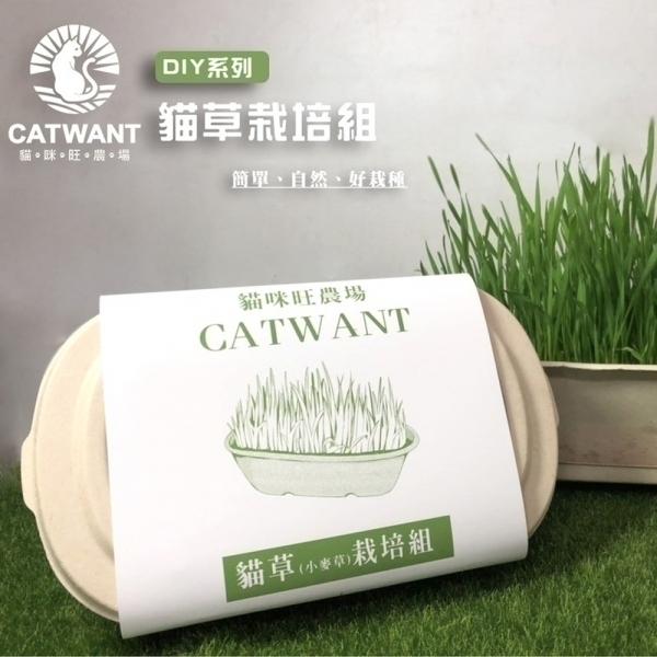 【貓咪旺農場】貓草(小麥草)DIY栽培組